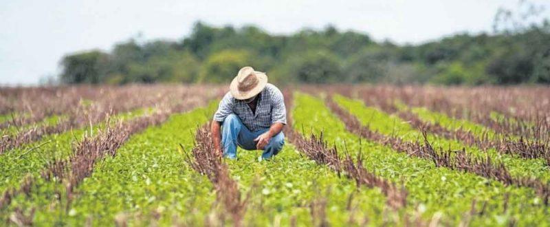 Dia do Trabalhador Rural e Comida Orgânica: conheça o trabalho da Casa do Sol em Ibitipoca (MG)